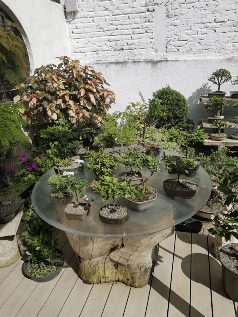 Table with bonsai trees exhibition