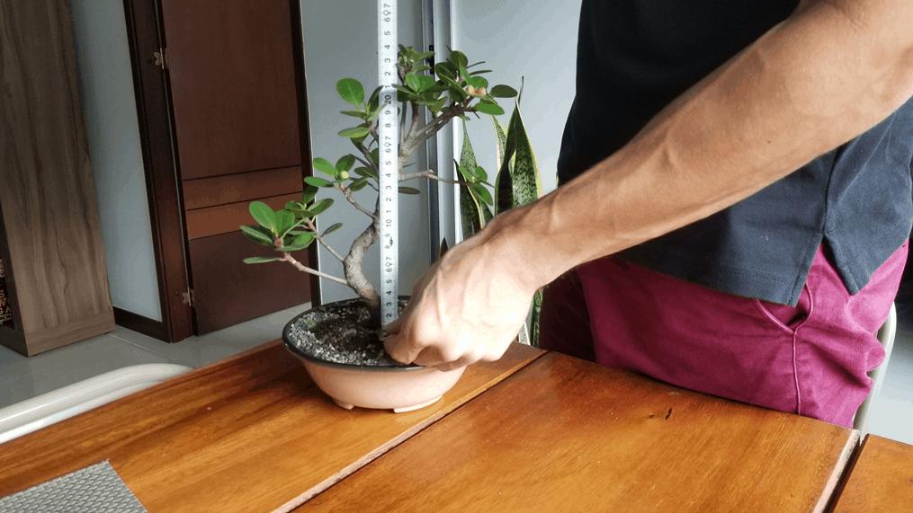 Measuring a Bonsai