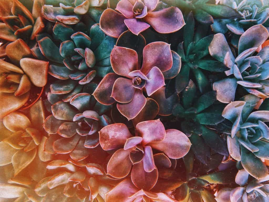 succulents and light