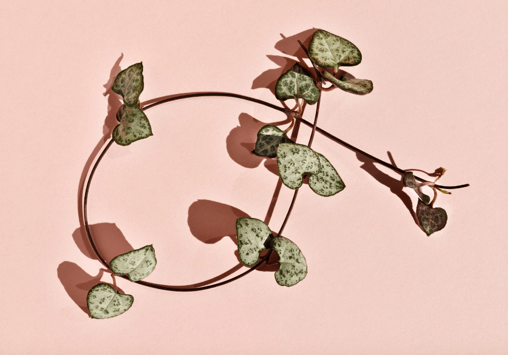 string of hearts stems